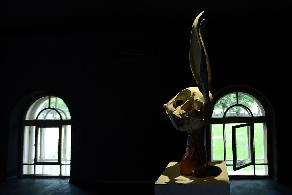 animatus-bugs-bunny-38836-69292.jpg