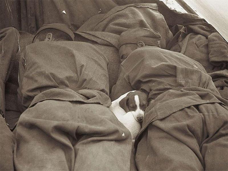 heartwarming war photos 18
