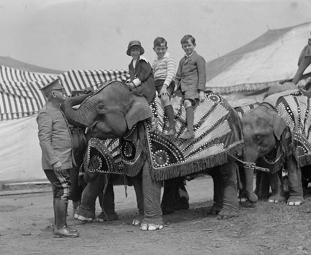 circus elephant riding
