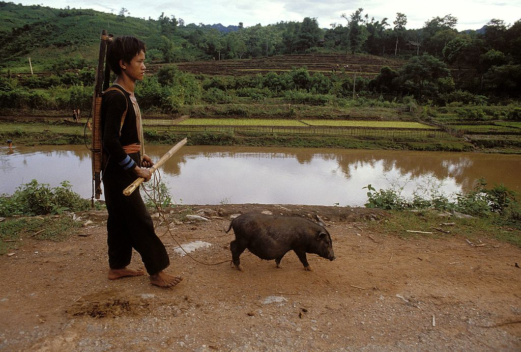 Man walking his pet pig