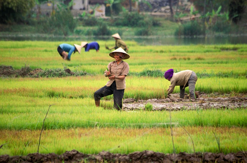 Women working in the field