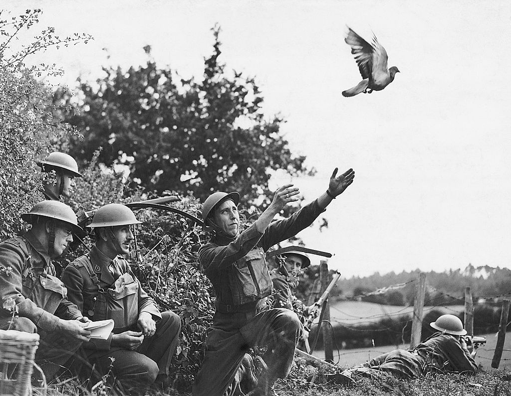 soldiers releasing a bird when other means of communication had broken down, the Army pigeons all over the countryside are ready