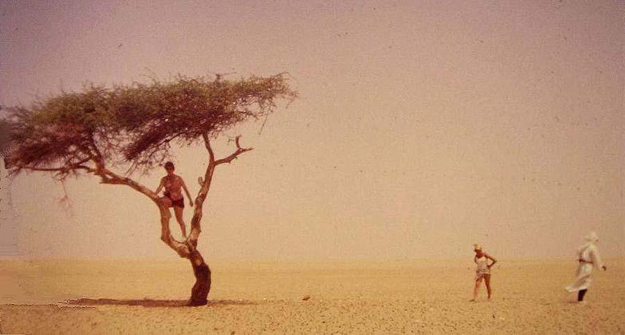The-Tree-of-Tenere-72399