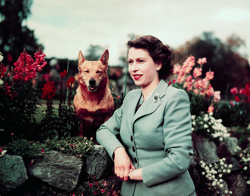 GettyImages-515462654 Queen Elizabeth II of England at Balmoral Castle with one of her Corgis