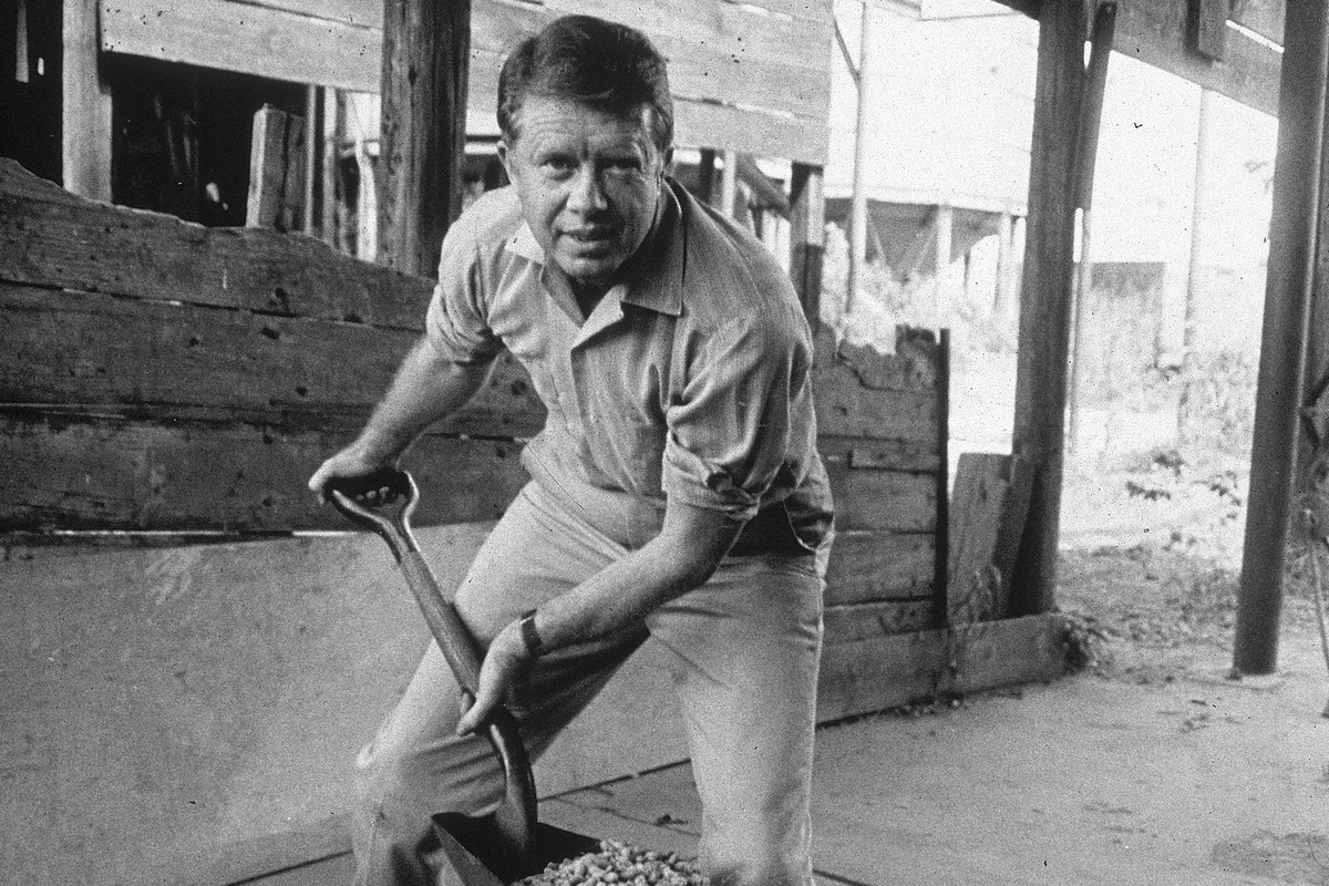 American politician Jimmy Carter ooks up while shoveling peanuts on a peanut farm,
