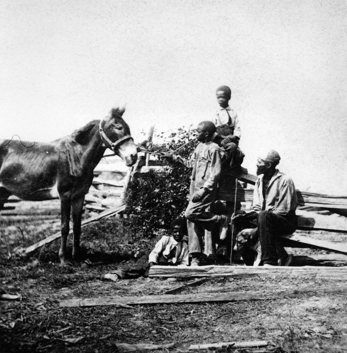 Slaves in a field with a horse during the US civil war circa 1861.