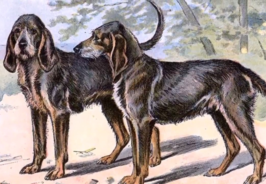 Now-extinct Chien-gris scenthounds