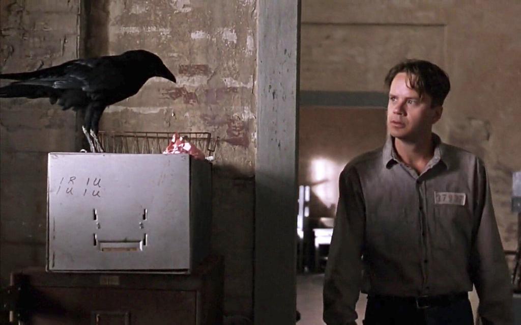 The crow Jake