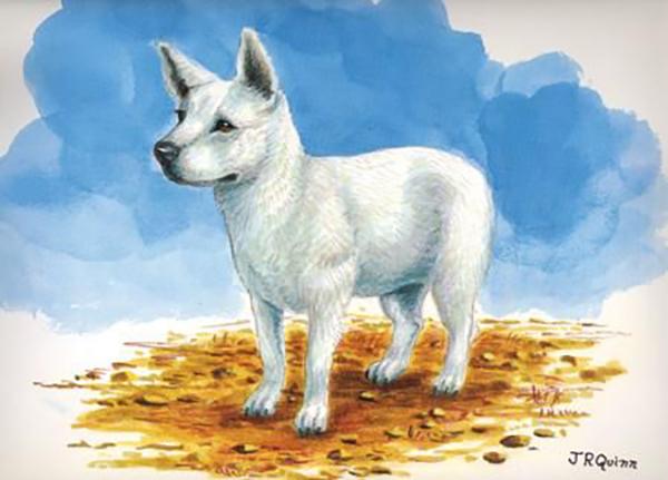 The extinct Hawaiian Poi Dog