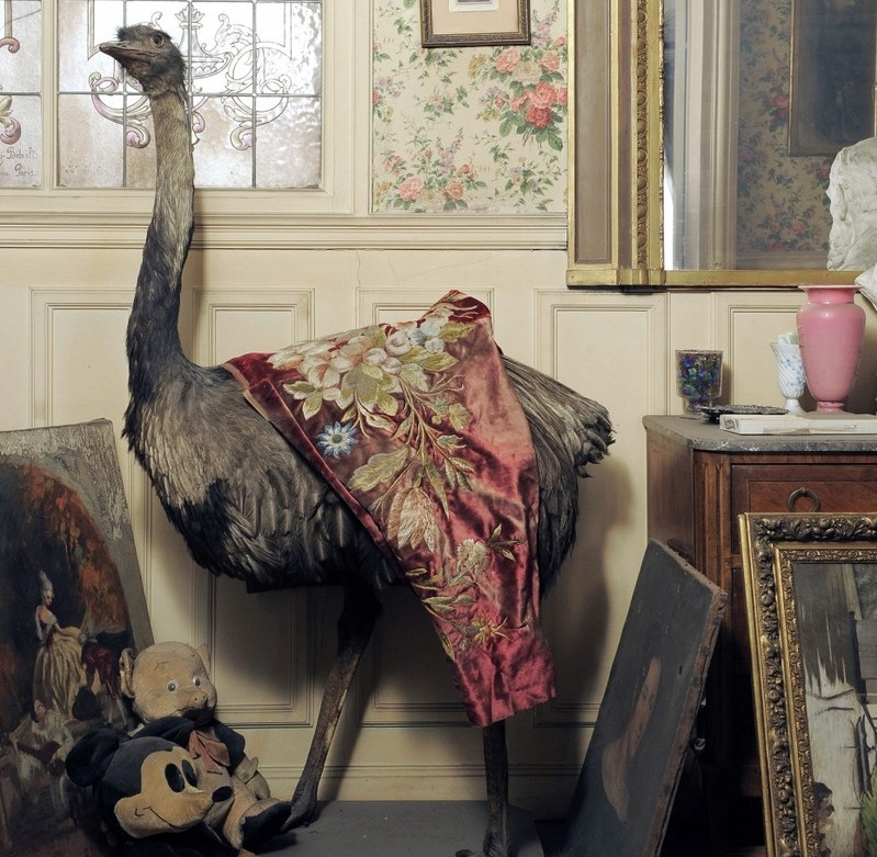 A statue ostrich stands near a wall amongst paintings.