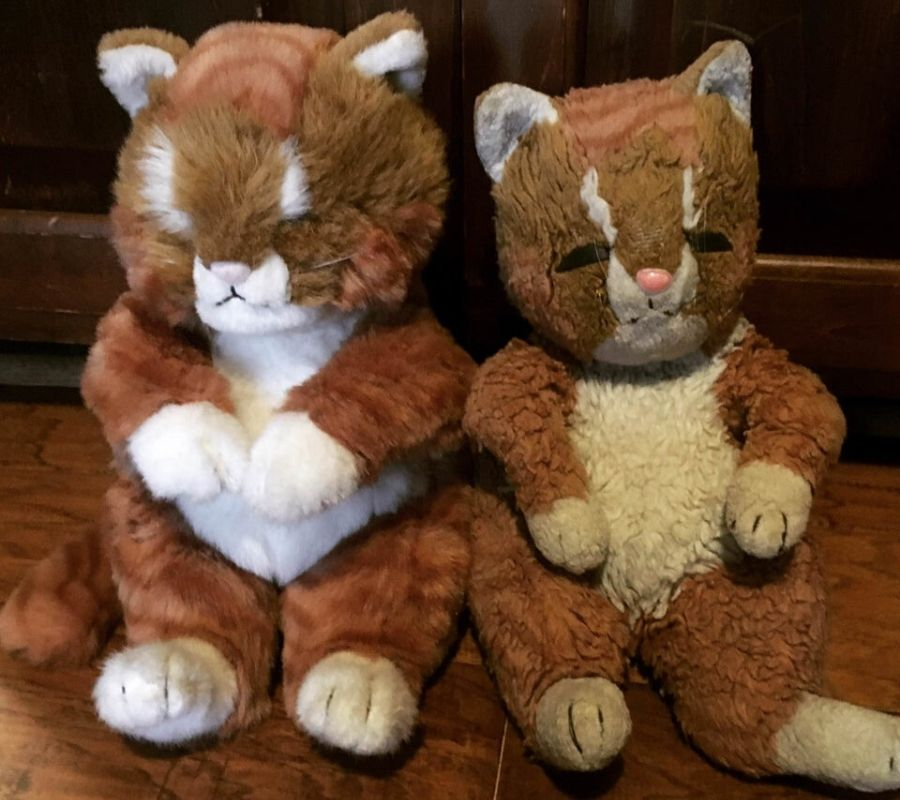 two versions of the same cat, one is just older