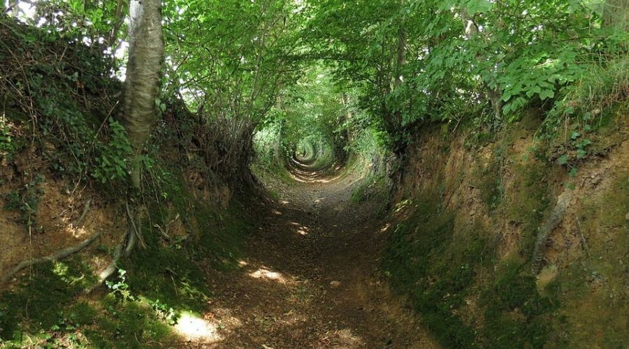 a well worn trail in a forest