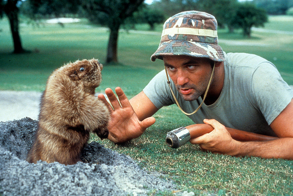 Bill Murray eye to eye with a groundhog in a scene from the film 'Caddyshack'