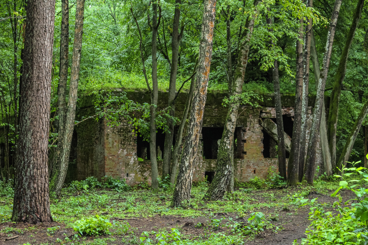 Wolf's Lair, one of Hitler's hideouts during World War II, is concealed behind trees.