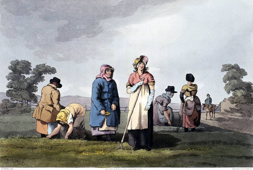 Women working in the fields