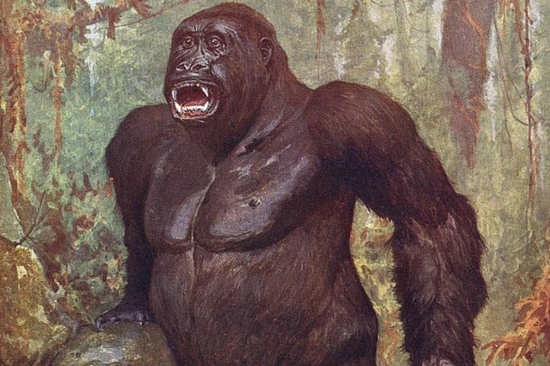 Painting of a gorilla