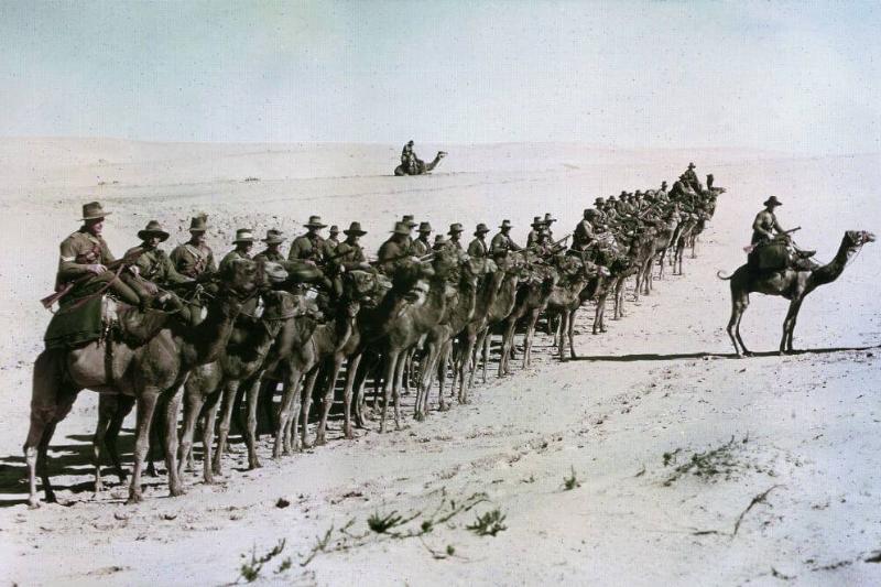 Camels-75300