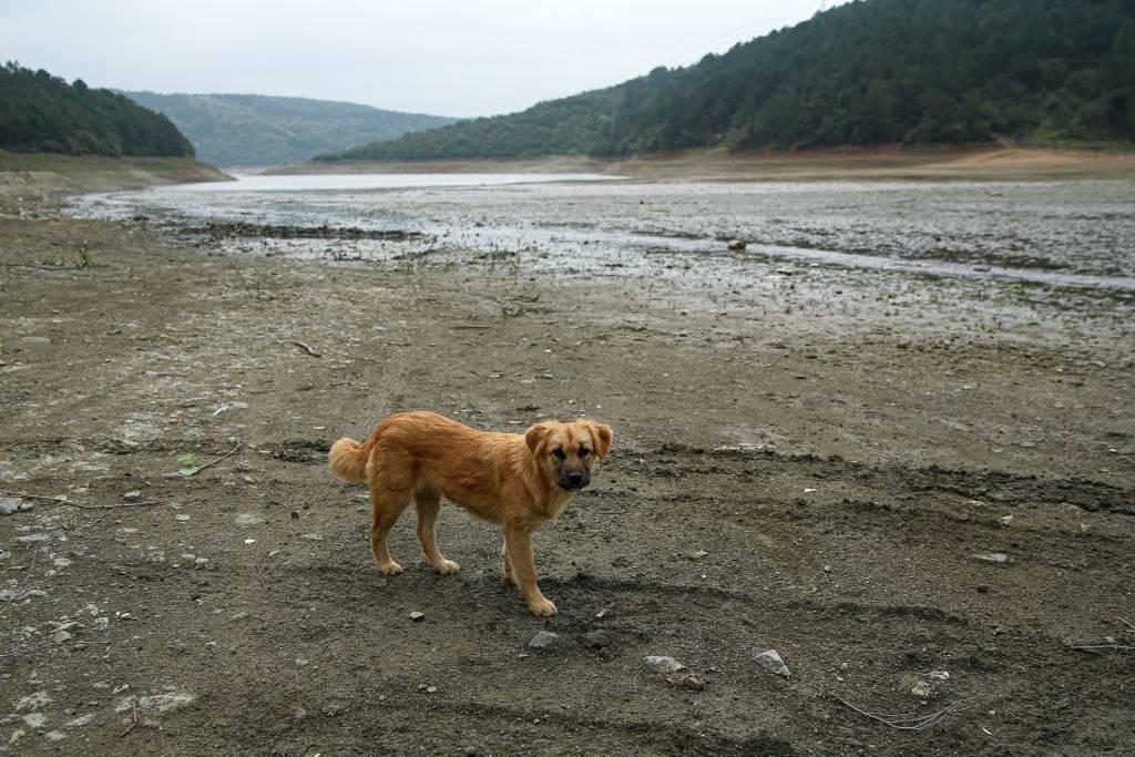 Dog on river's edge