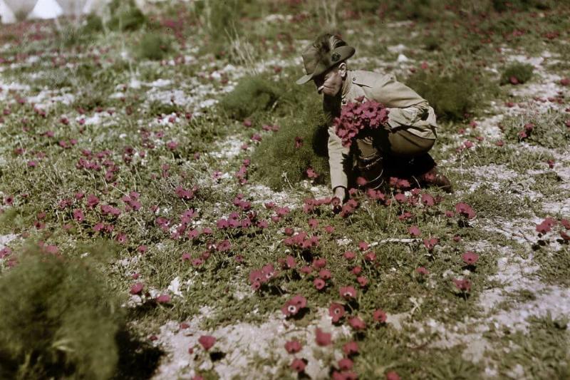 Picking-Flowers-15829