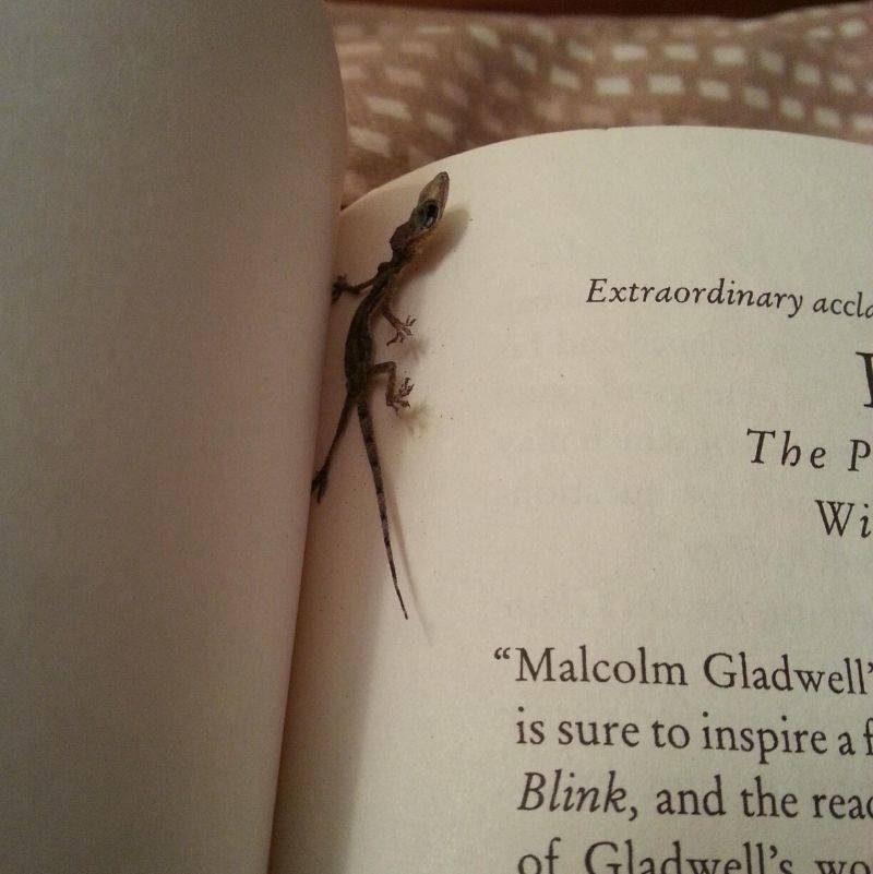 a lizard that squished by a book