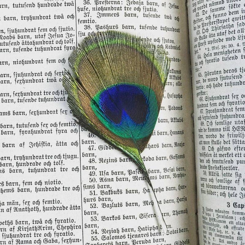a peacock feather in a book from the1860's