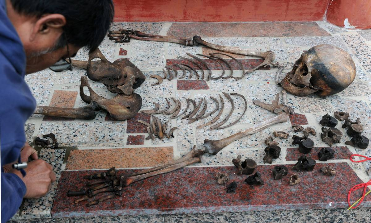 An archaeologist cleans an ancient human skeleton.