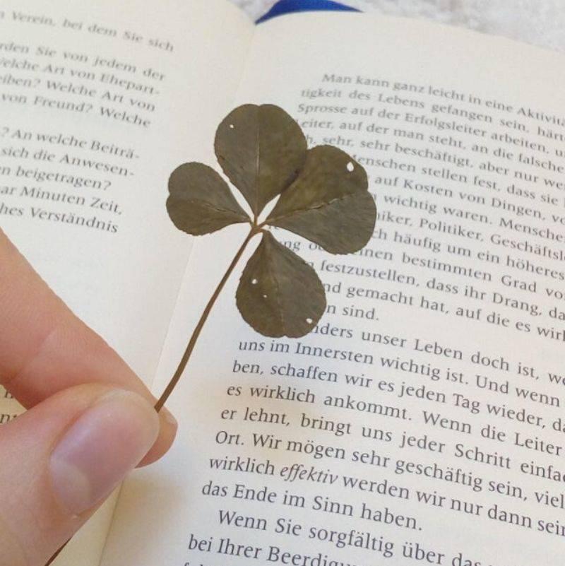 a four leaf clover in a book