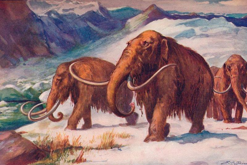 Painting of a mammoth