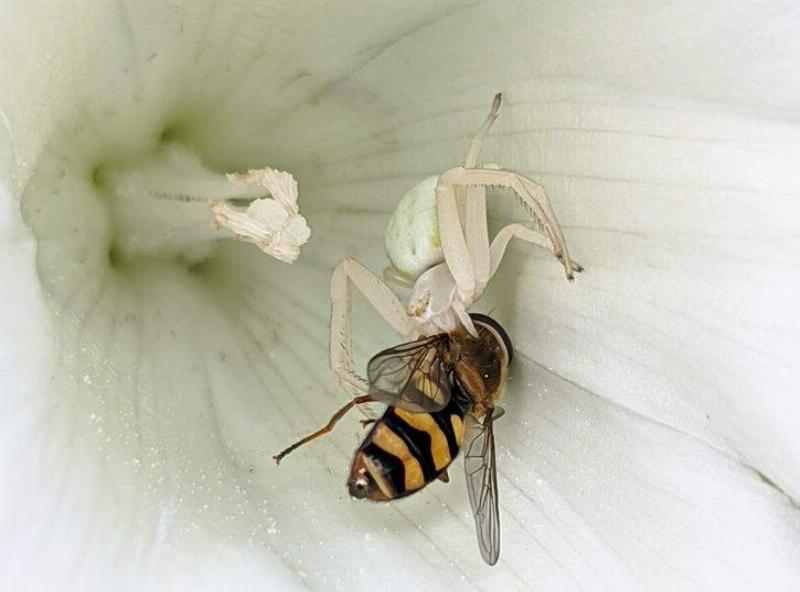 spider eating bee