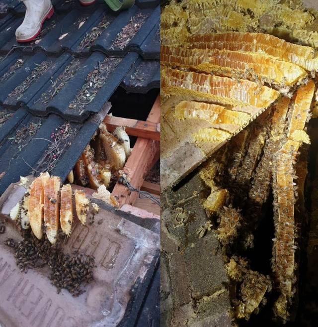 roof honey