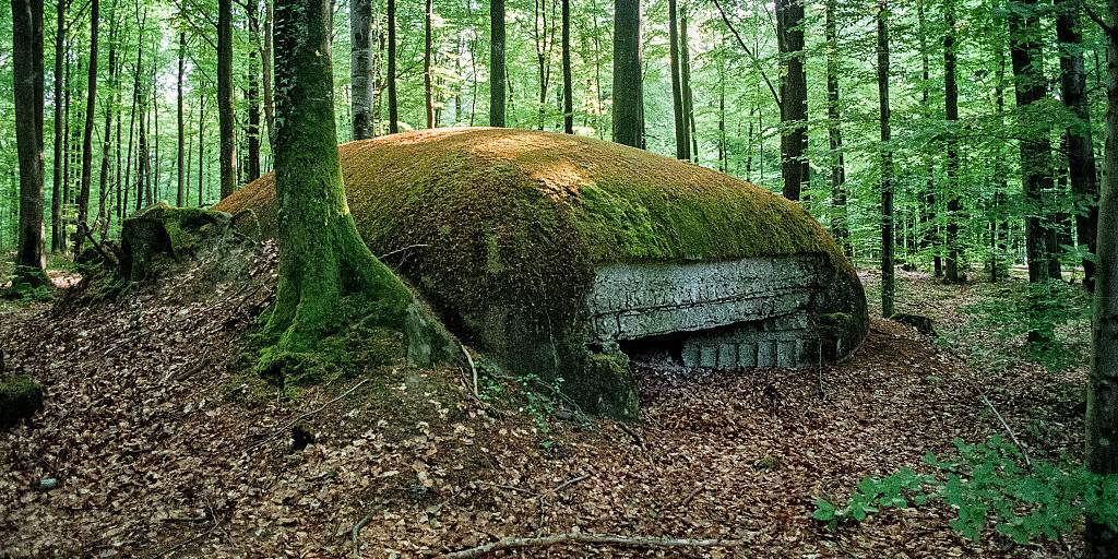 Picture of an overgrown bunker