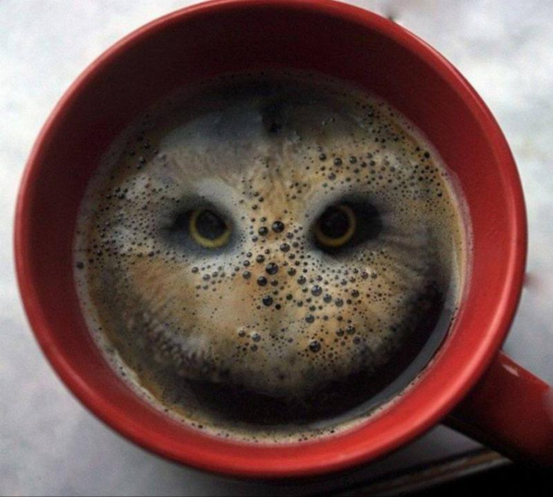 owl in a coffee cup