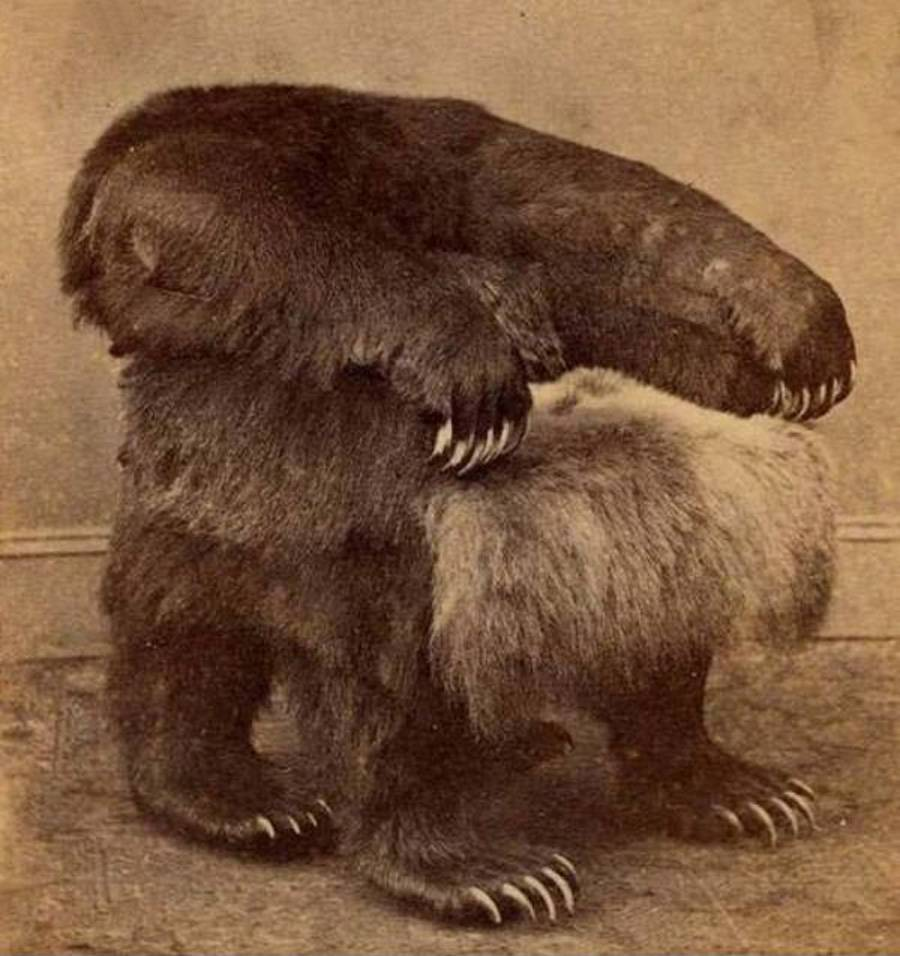 A chair is made from taxidermy bear legs.