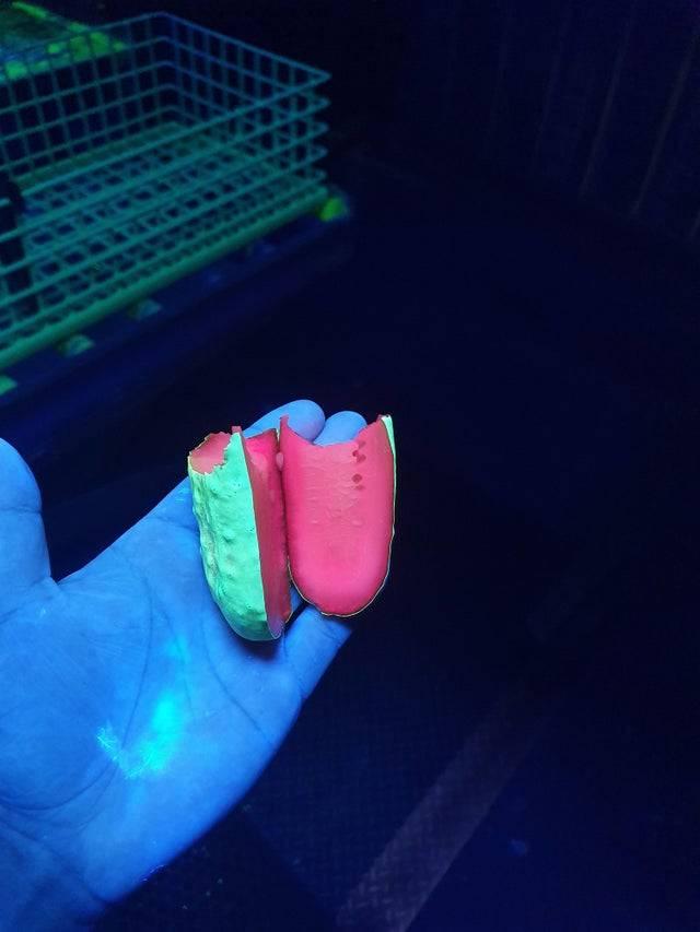pickle under ultraviolet light