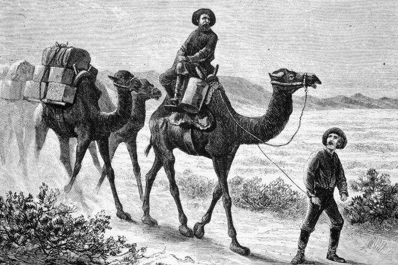 Members of the camel corps ride camels through the southwest U.S. in 1857.