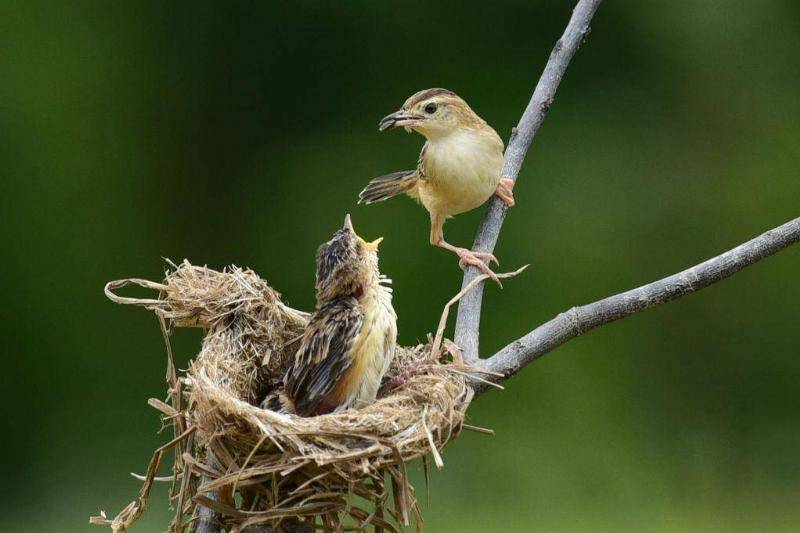 Mother Birds Will Disown Their Young If Touched By Humans
