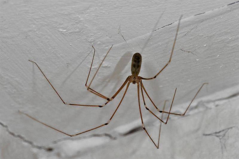 spider-78549