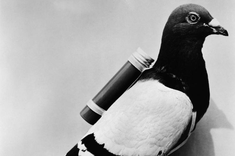 carrier-pigeon-note-6