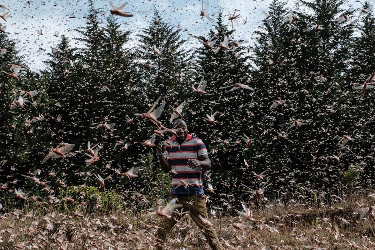 A man walks through a locust swarm in Kenya.