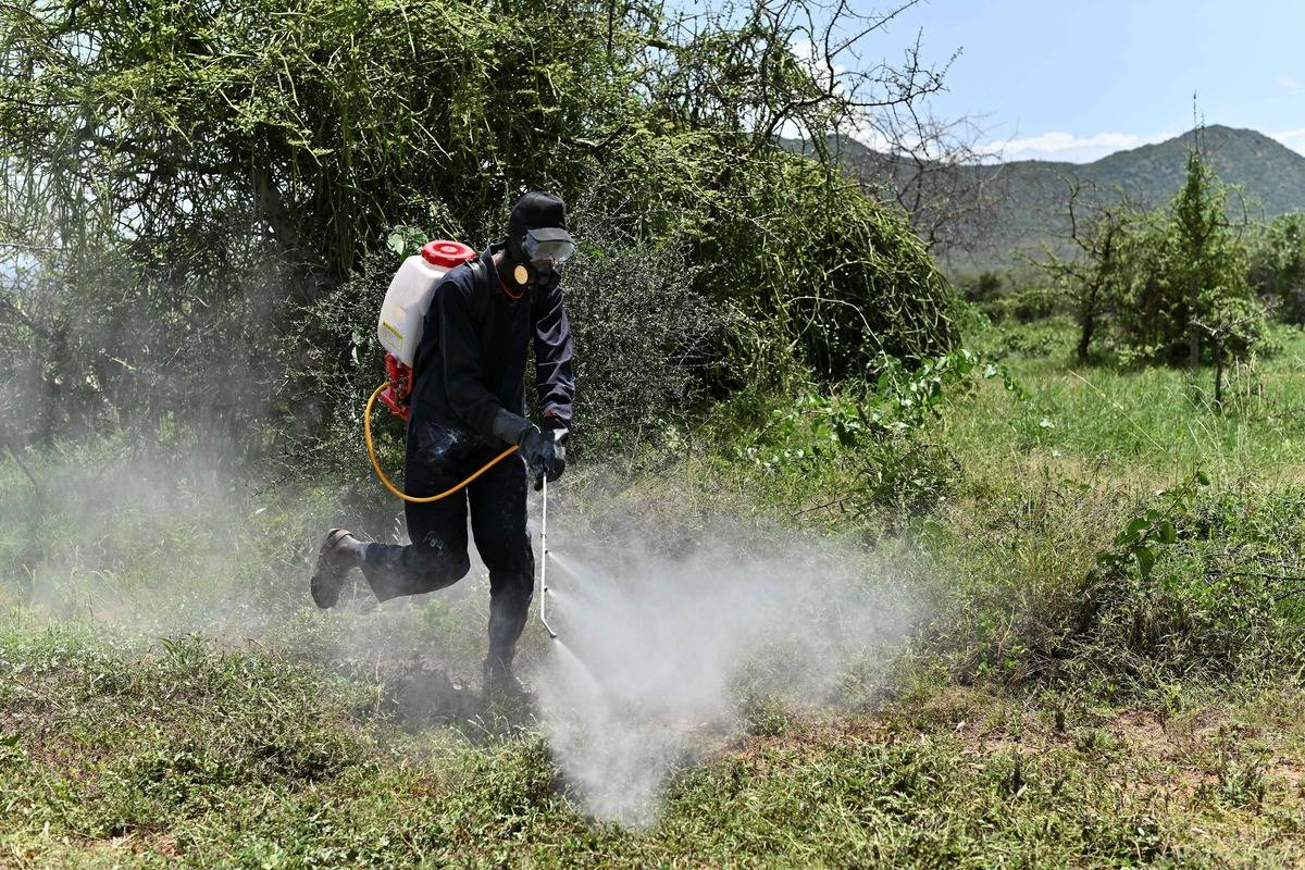 A volunteer sprays pesticides to deter locusts.