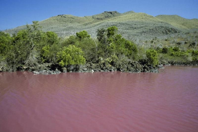 A river on the Galapagos Islands is red because of red algae.