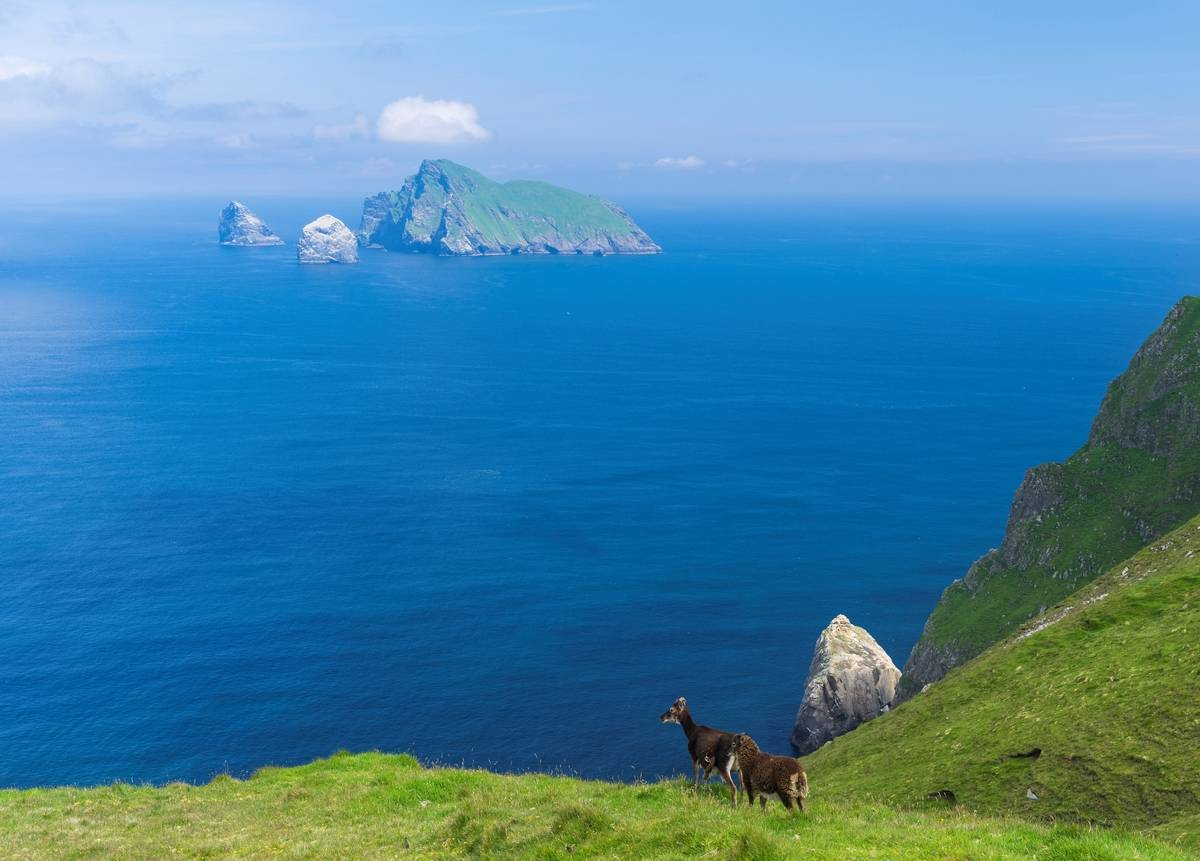 Sheep on the island of Hirta look at a different island as part of St Kilda.