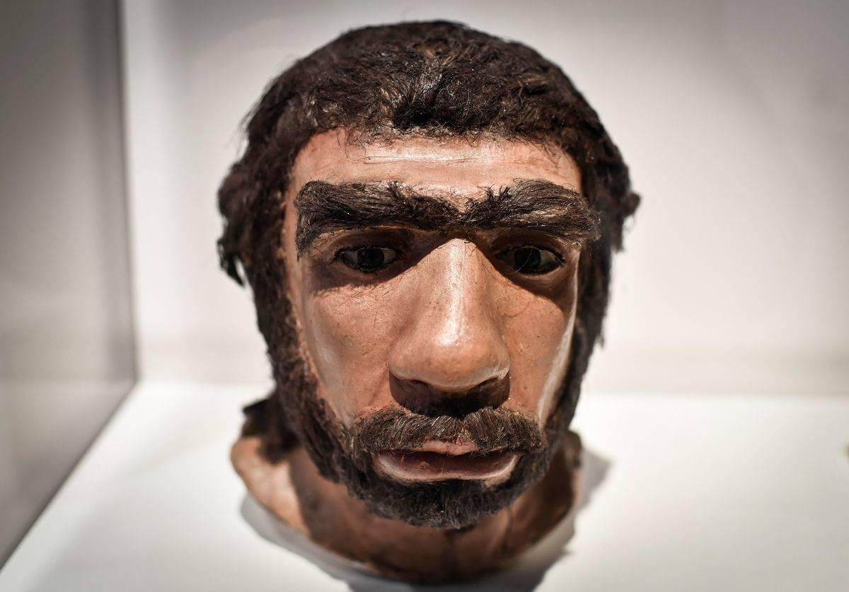 A moulding displays what a Neanderthal might have looked like.