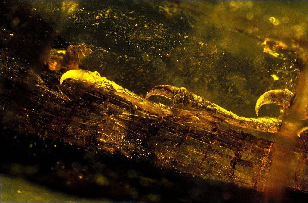 an ancient lizard in amber
