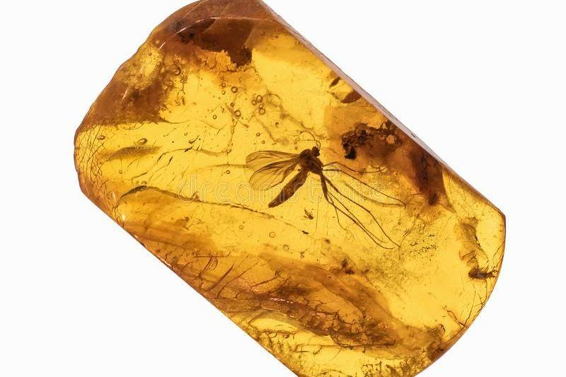 an insect inside an amber fossil