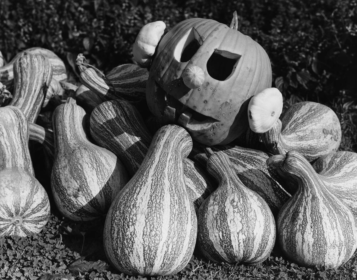 A jack-o'-lantern surrounded by gourds outside