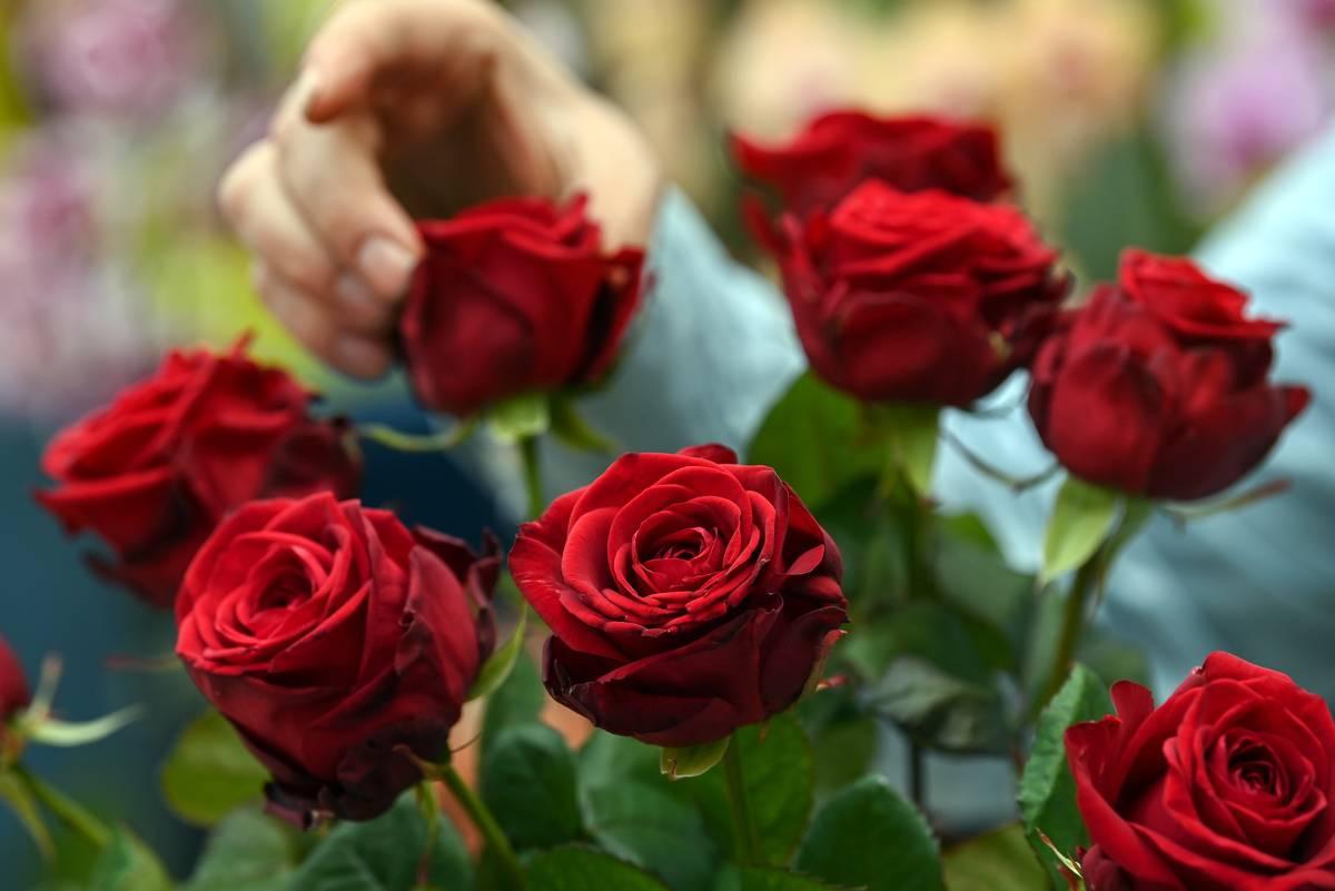 A florist arranges red roses in a bouquet.
