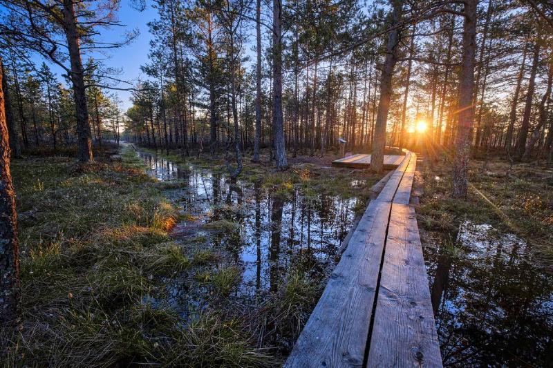 Sun rises at Viru Bog forest in Estonia. Estonia is a small...