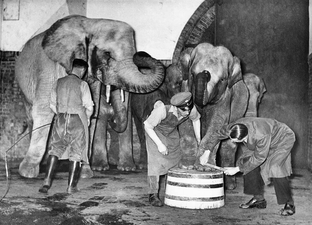The Berlin Zoo Was Bombed, and Only One Elephant Survived